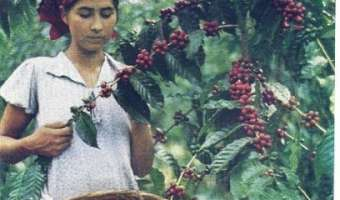 Café de El Salvador por National Geographic en 1944